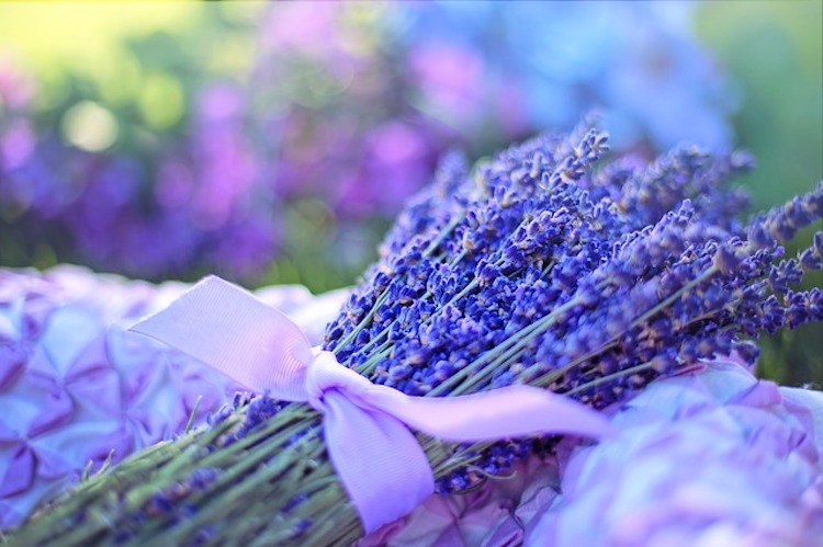 Lavender Essential Oil: Complete Benefits & Uses Guide