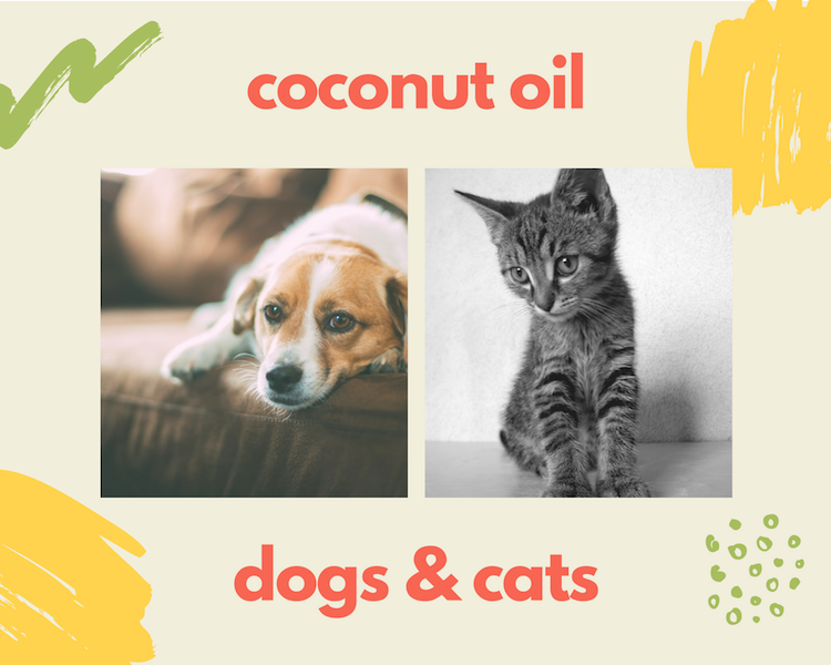 Coconut Oil For Dogs and Cats
