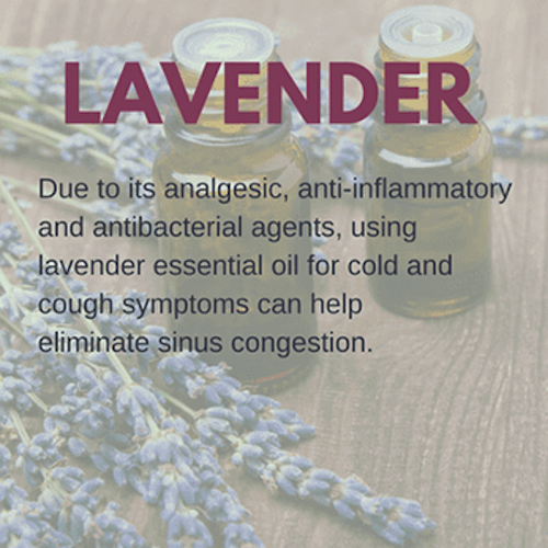 Lavender Oil for Colds