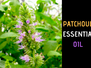 Patchouli Essential Oil: Complete Benefits & Uses Guide