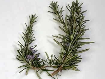 Rosemary Essential Oil: Complete Benefits & Uses Guide