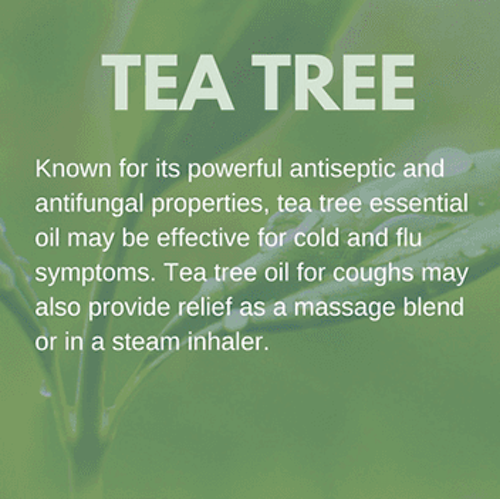 Tea Tree Oil for Coughs