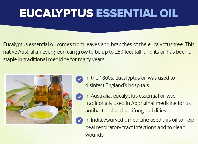 What is Eucalyptus Oil