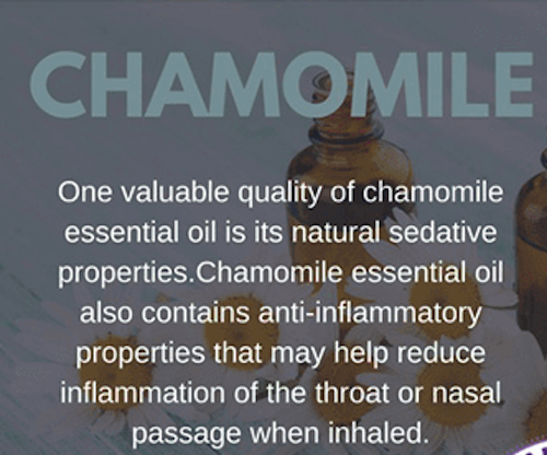 Chamomile Oil for Snoring