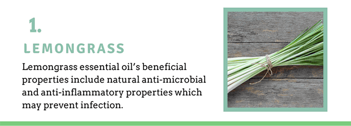 Lemongrass Oil for Bug Bites