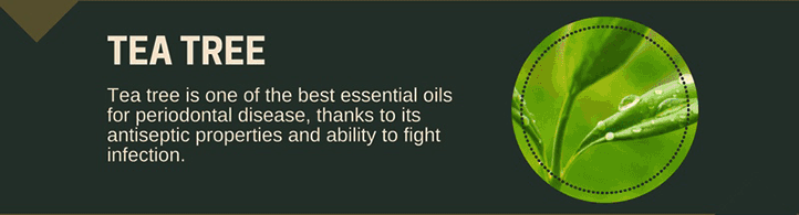 Tea Tree Oil for Toothaches