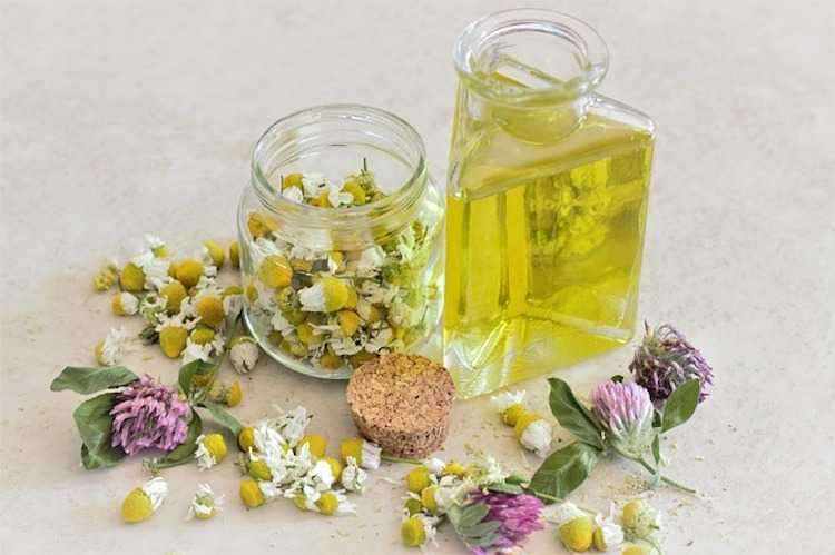Chamomile Oil for Cold Sores