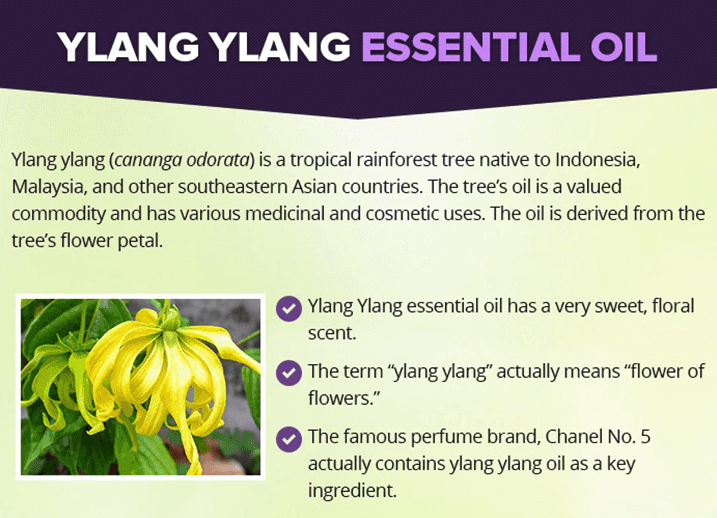 What is Ylang Ylang Oil