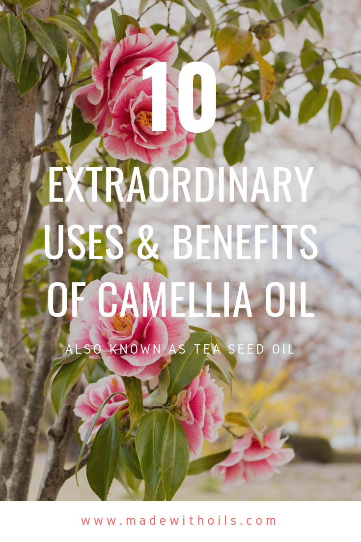 Learn how this Japanese flower called Camellia can enhance your beauty | MadeWithOils.com